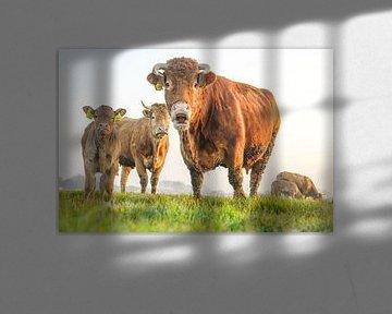 Hey Juh!! Koe en kinderen van Dirk van Egmond