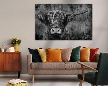 Porträt der schottischen Highlander-Kuh in Schwarz-Weiß von KB Design & Photography (Karen Brouwer)