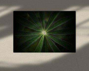 Lichtpuntje van Sonja Onstenk