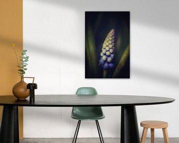 Blauw druifje van Sonja Onstenk