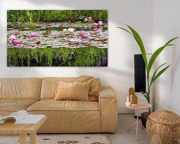 Kleurige waterlelies