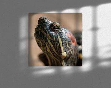 Schildkröte: Ich beobachte Sie von Klaartje Majoor