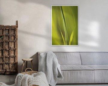 Green, green grass of home van Sonja Onstenk