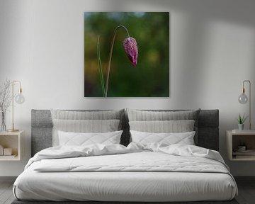 Wildkiebitz-Blume (NL) von Paul van der Zwan
