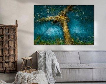 De appelboom van jowan iven