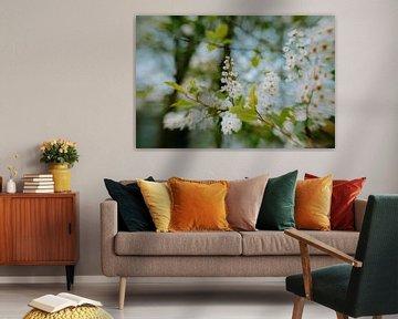 Cremige Blüten von Hiske Boon