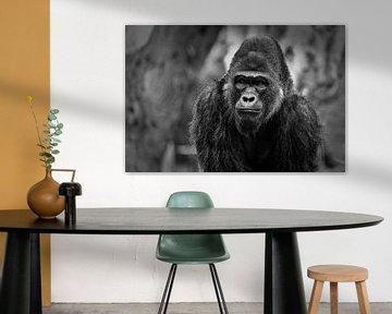 Gorilla-Porträt mit unscharfem Hintergrund schwarz & weiß von Mohamed Abdelrazek