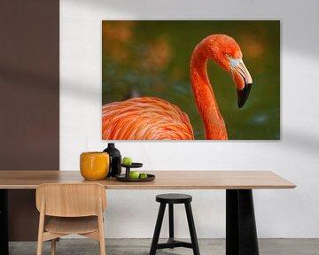 Flamingo portret met piek, oog en nek