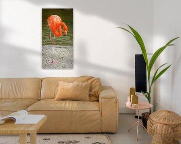 Het portret van de flamingo die geïsoleerde vogel toont die één been staat