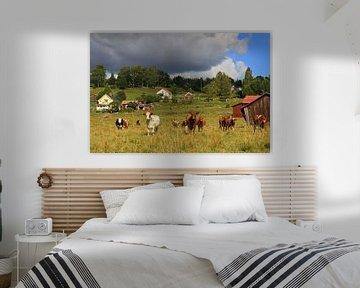 Koeien van Antwan Janssen