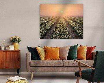 Nebliger Sonnenaufgang über den Tulpen von Ellen van den Doel