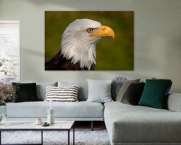 Weißkopfseeadler von Tanja van Beuningen