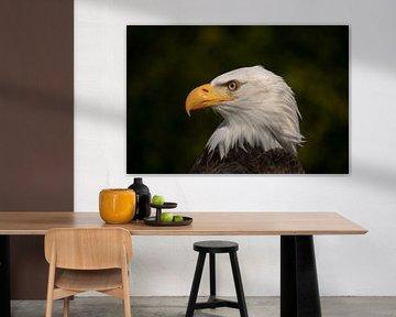 Amerikanischer Weißkopfseeadler Porträt von Tanja van Beuningen