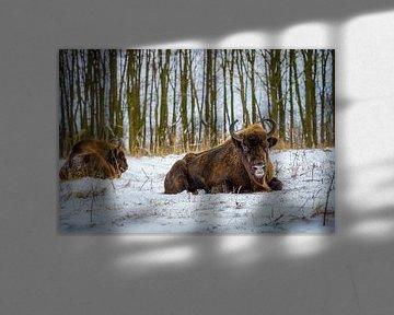Nahaufnahme 2 Wisente im Schnee von Erwin Floor