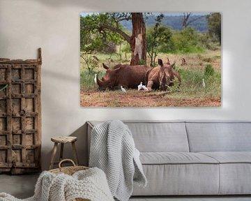 Zwei Breitmaulnashörner von Jolene van den Berg