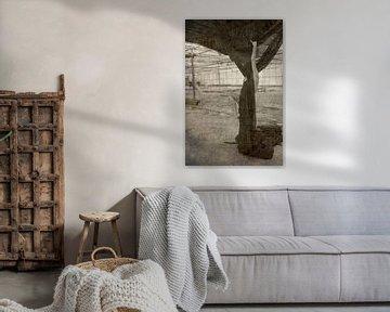 Klettern auf den Baumwollbaum von Herman Peters
