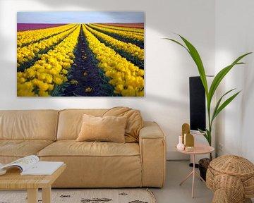 Tulpenveld van t.ART