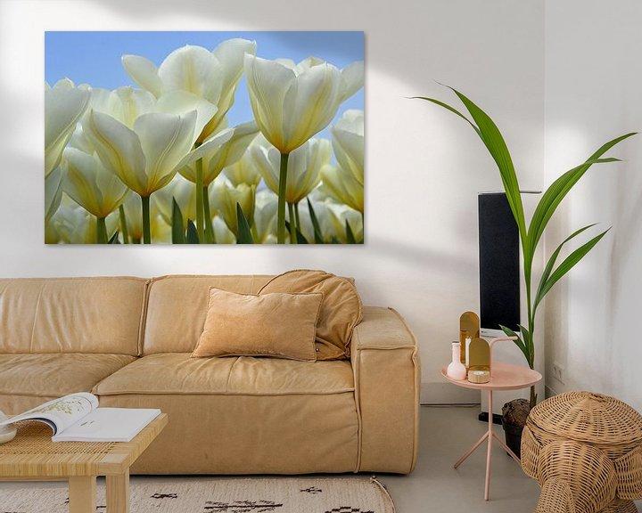 Sfeerimpressie: Witte tulpen in de Bollenstreek/Nederland van JTravel