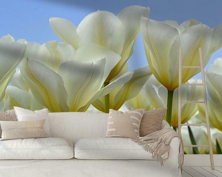 Sfeerimpressie behang: Witte tulpen in de Bollenstreek/Nederland van JTravel