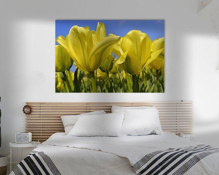 Sfeerimpressie: Gele tulpen in de Bollenstreek/Nederland van JTravel