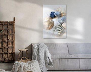 Net Sea Shells van Brian Raggatt