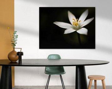 Wit eenvoud van Veerle Addink
