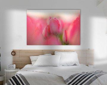 Tulpe von Sjon de Mol