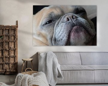 Franse bulldog hondensnuit van Anke Winters
