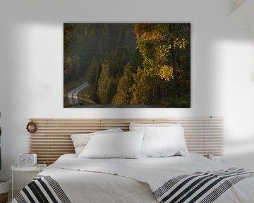 Op weg door de Zweedse bossen in de herfst van Mindy Molein