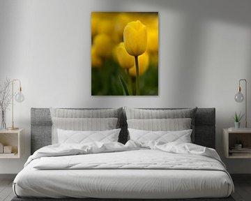 Porträt einer Tulpe (gelb)