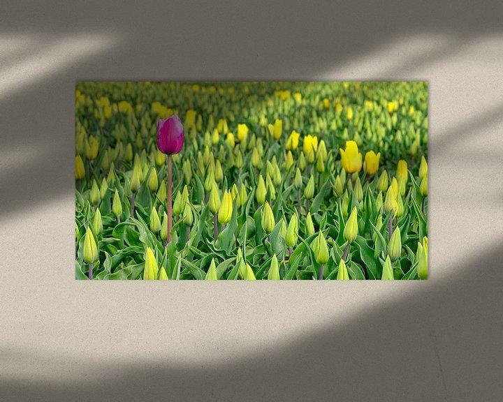 Sfeerimpressie: Rode tulp in een geel tulpenveld van eric van der eijk