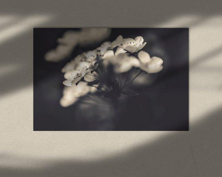Beispiel: Blumen in Schwarz-Weiß-Kunstfotografie von Photography by Naomi.K