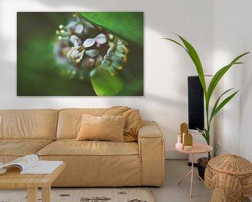 Makrofotografie einer Blume von Photography by Naomi.K