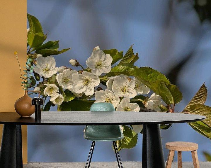 Sfeerimpressie behang: Bloesems van een wilde kers - Prunus avium van Kristof Lauwers