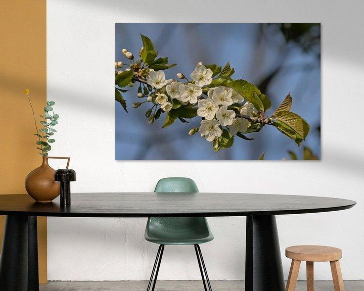 Sfeerimpressie: Bloesems van een wilde kers - Prunus avium van Kristof Lauwers