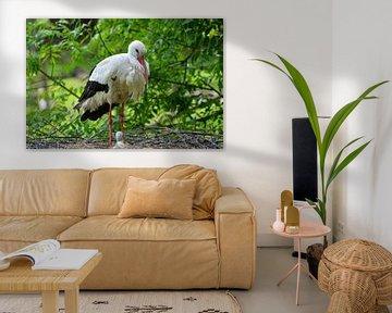 Storch mit Baby im Nest von Luca Schmidt