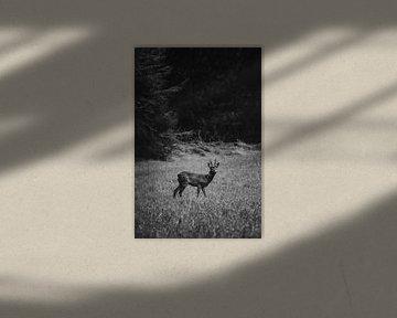 Reebok in de velden bij Junne van Holly Klein Oonk