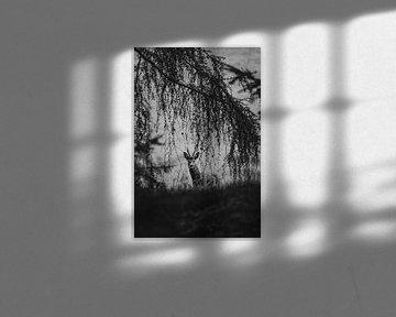 Nieuwsgierige reebok in het bos van Holly Klein Oonk