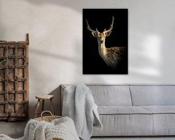 Hirsch: Porträt eines Hirsches mit schwarzem Hintergrund von Marjolein van Middelkoop