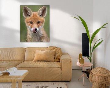 Jonge vos likt zijn snuit schoon van Patrick van Bakkum