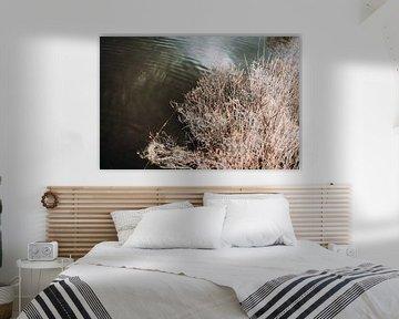 Langs het water in het bos van Holly Klein Oonk