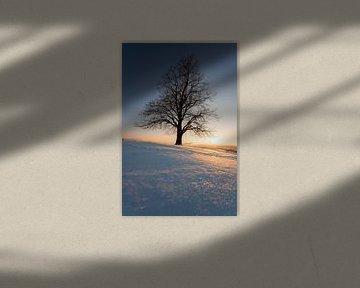 Zonsondergang aan een boom met schommel in de winter van Leo Schindzielorz