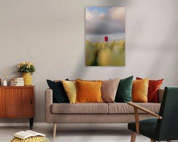 Gele tulp met één rode! van Rossum-Fotografie