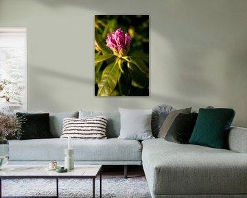 Botanische kunst van een bloeiende Rhododendron | fine art natuur fotografie van Karijn | Fine art Natuur en Reis Fotografie