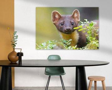 Portret van een boommarter tussen de bladeren en kijkend naar de camera van Nature in Stock