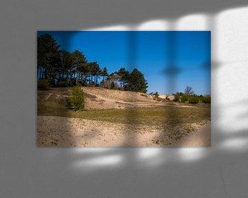 Duinen in het bos van Consala van  der Griend