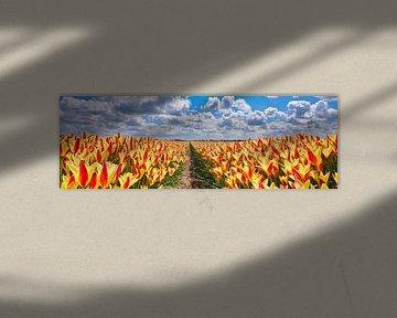 een Lente landschap met geel-rode tulpen in een panoramabeeld