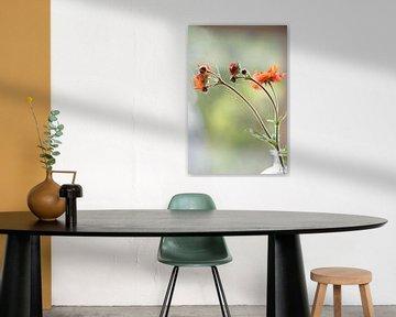Oranje gaum bloemetjes in glazen vaasje van Gaby Hendriksz