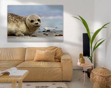 Zeehond, Helgoland van Edwin Hendriks
