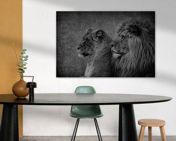 Leeuwen: Leeuw en Leeuwin koppel in zwart-wit van Marjolein van Middelkoop